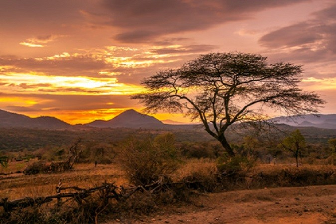 Africa! (KS2)