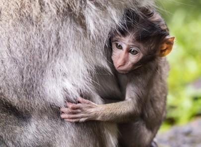 Monkey Puzzle (KS1)
